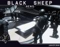 Black Sheep News – 1